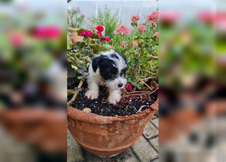 Verschenken in papenburg hunde zu Hunde