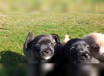 Verschenken in papenburg hunde zu Hund in