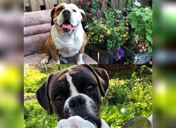 In papenburg zu verschenken hunde Hund dringend