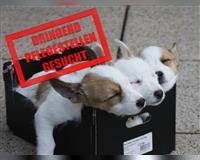dringend-pflegestellen-fuer-den-winter-gesucht---hundehilfe-marika-ev-muenchen