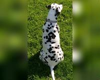 biete-liebevolle---erfahrene-hunde-betreuung-mit-viel-zeit--herz-und-geduld-gestaltet-nach-mass-braunschweig