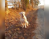 hund-sucht-freizeitpartner-buende