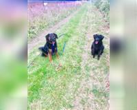 hunde-und-kaninchenbetreuung--hundepension--gassiservice--kaninchenbetreuung--hundefriseur-dohma