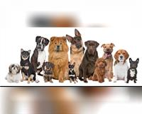 hundebetreuung-liebevoll-+-flexibel--saarbruecken