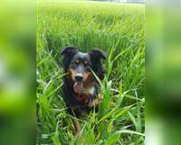 suche-liebevolle-hundebetreuung-fuer-mischlingshuendin-1-5-jahre-in-muenchen---dogsharing-schwarz-weiss-muenchen