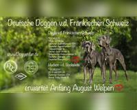 deutsche-dogge-goessweinstein