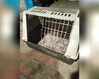 grosse-hunde-transportbox--stuhr