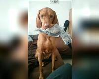 hundebetreuung-geboten-wietmarschen