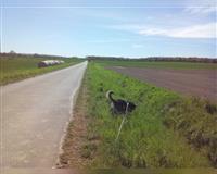 hundebetreuung-hunde-sitting-spaziergang-gassi-*-herzlich---erfahren-*-nach-wunsch-+-mass--braunschweig