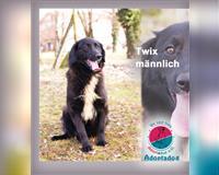 mischling-3-jahre-kirchzell