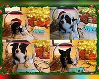 x-mas-weihnachtsgeschenk-fuer-ihre-tiere-vitapulse-von-elecsystem-macht-es-moeglich-elbtal