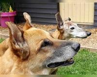 hundebetreuung---hundepension-remscheid