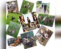 biete-gassi-service-und-hundebetreuung--hanau