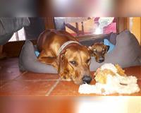 individuelle-hundebetreuung-mit-familienanschluss-aschering-poecking