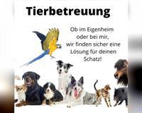 haustierbetreuung-hundebetreuung-hundesitter-hannover-hannover