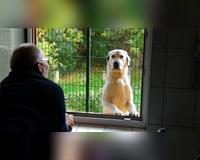 hundehotel---dog-inform---mirjam-cordt-erbes-buedesheim