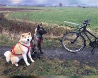 suche-dogsharing-partner--noerten-hardenberg